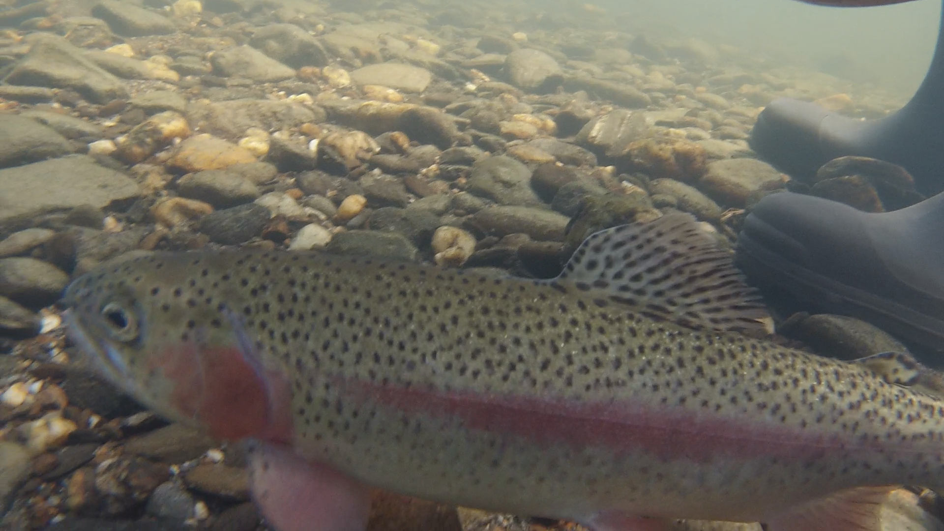 Fly Fishing NH - Where to go, What to Expect, Fishing Guides & Seasons