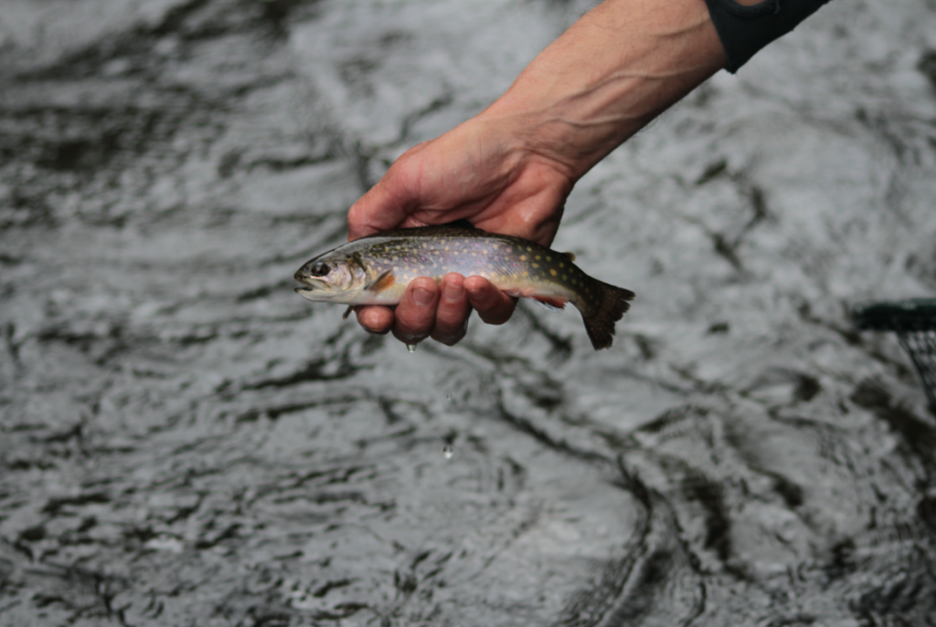 Fly Fishing Upper Connecticut River