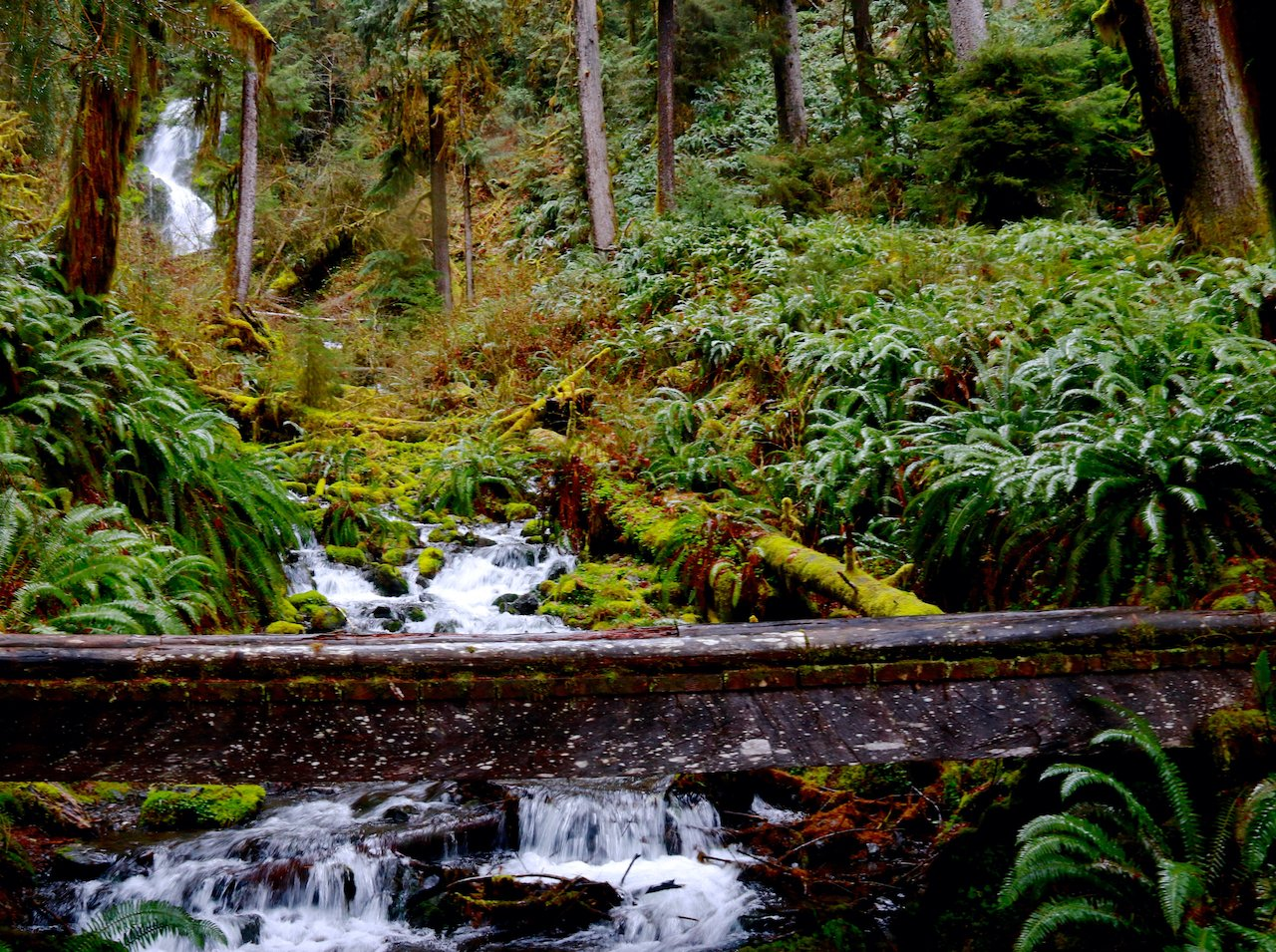 The Ultimate Guide to the Olympic National Park's Hoh Rainforest