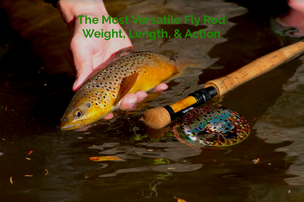 Most Versatile Fly Rod Weight, Action, And Length
