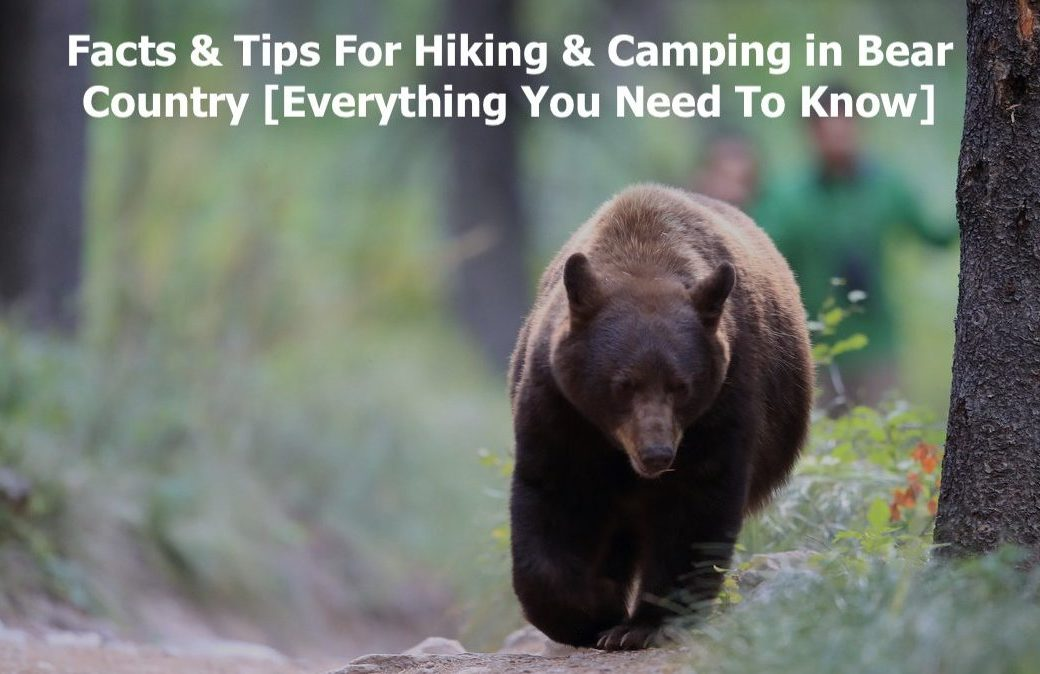 Facts & Tips For Hiking & Camping in Bear Country [Everything You Need To Know]