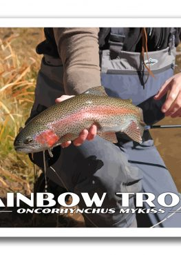 Rainbow Trout Poster Photography Print