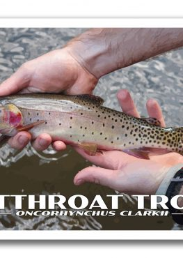 Cutthroat Trout Poster