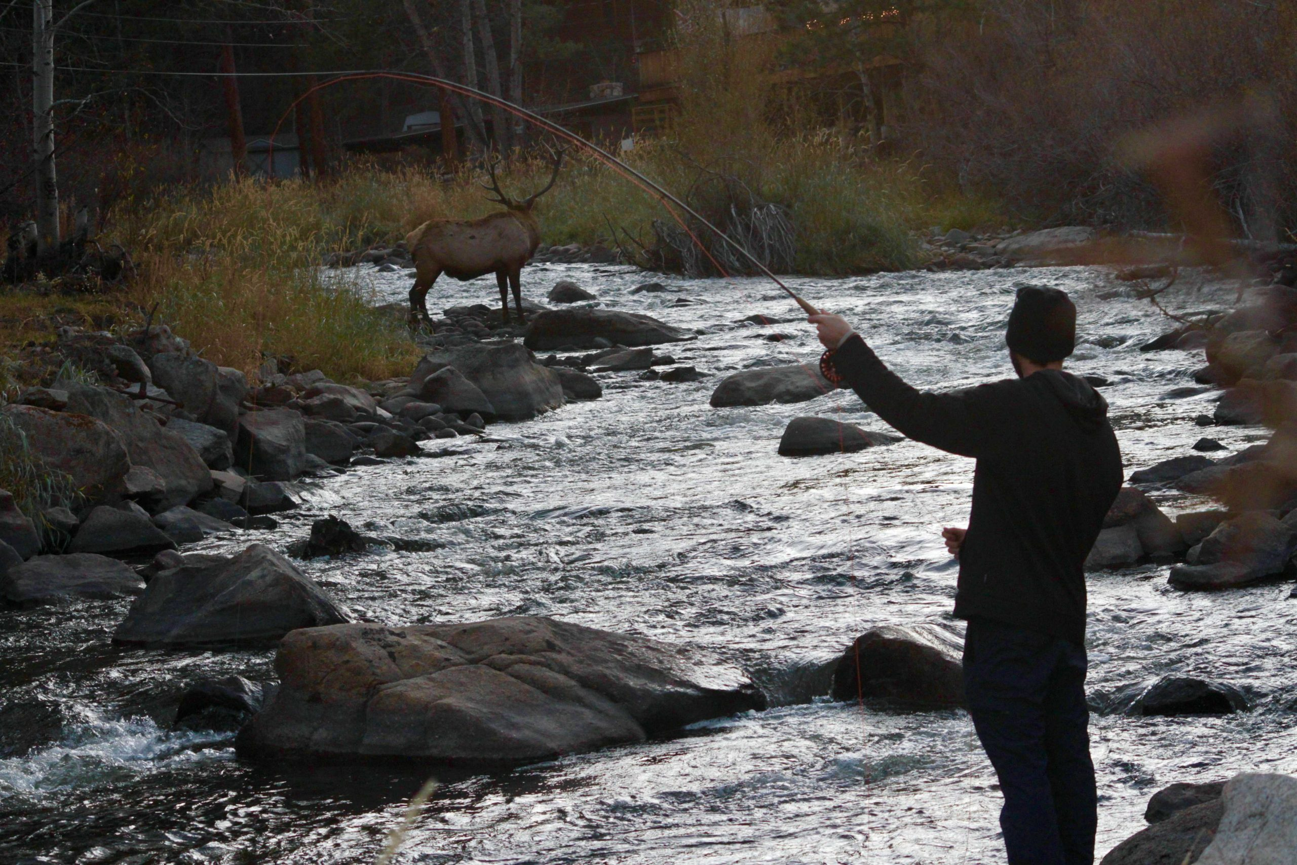 Fly Fishing The Big Thompson River In Colorado