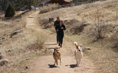 Why You Should Take Your Dog Hiking With You