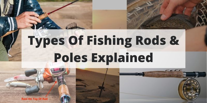 Types Of Fishing Rods & Poles Explained [Key Differences]