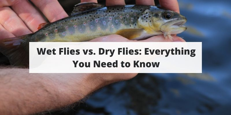 Wet Flies vs. Dry Flies: Everything You Need to Know