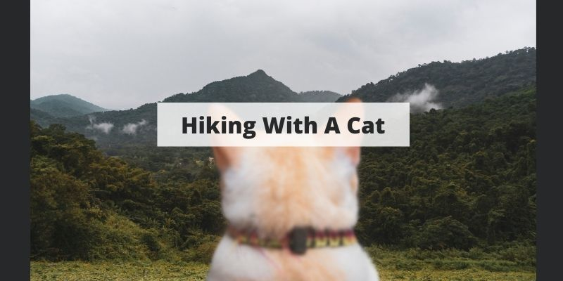 Complete Guide To Hiking With A Cat