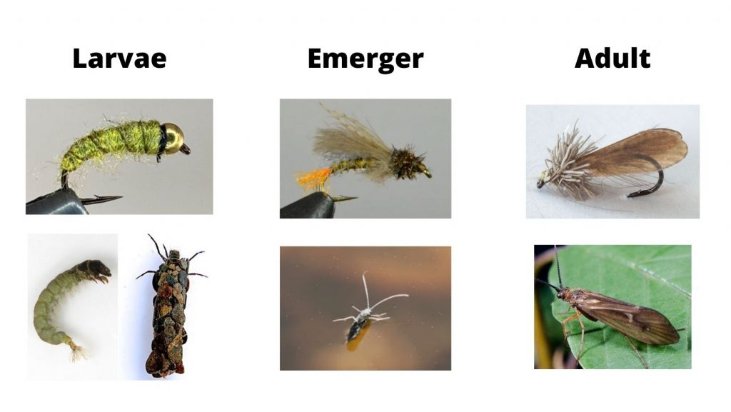 Caddis Life Stages And Flies