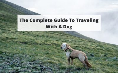 Flying with a Dog – The Complete Guide