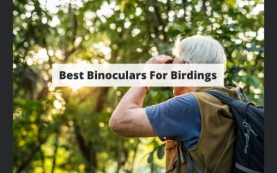 Finding The Best Binoculars For Birding – Everything You Need To Know